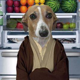 Jedi Ted